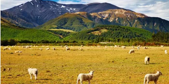 新西兰奥克兰房市趋冷 专家称中国买家将回归