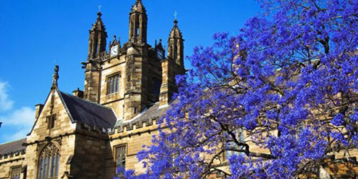 昆士兰大学会计申请成功