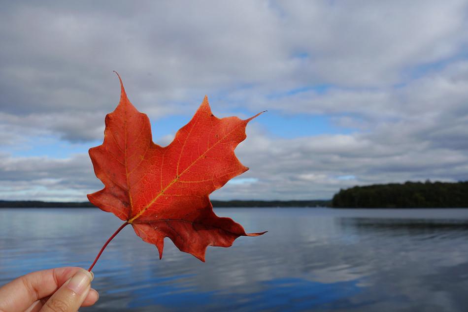 加拿大留学如何转移民?